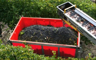 What Is The Best Type Of Bin For Harvesting Grapes?